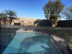 mesh Pool Fence Quality at 13 years old